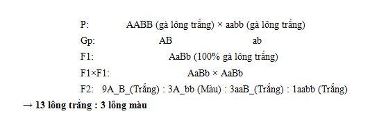 cac-kieu-tuong-tac-gen-khong-alen-1-jpg.3666