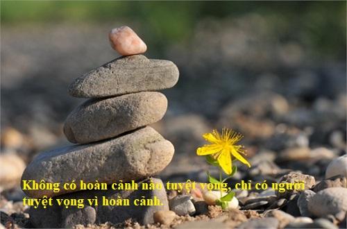 cau-noi-hay-ve-cuoc-song-va-tinh-yeu-jpg.7533