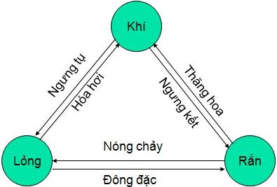 su-soi-png.4966